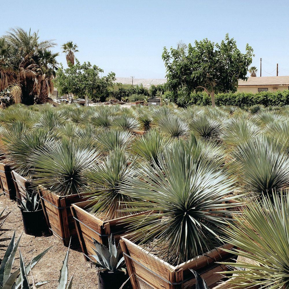 Sunland Cactus Nursery Spring Garden