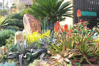 Gardens By Jenise: Magnificent, Mature Succulent Gardens - Michael Buckner - San Diego