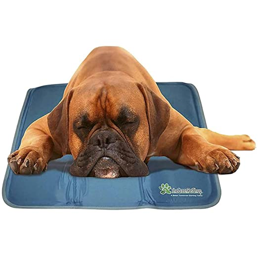 Thegreenpetshop Dog Cooling Mat Pressure Activated Gel Cooling Mat For Dogs Medium Large Size This Pet Cooling Mat Keeps Dogs And Cats Comfo In 2020 With Images Dog Cooling Mat