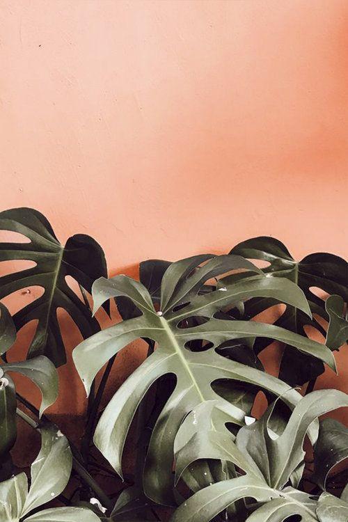 Colour Crush — Adam Robinson Design