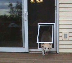 security boss pet screen door pet