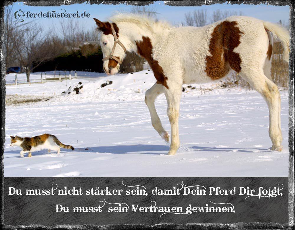 sprüche pferde vertrauen Wahre Worte! #Pferde #Pferd #Vertrauen #Reiten #Katze #Katzen  sprüche pferde vertrauen