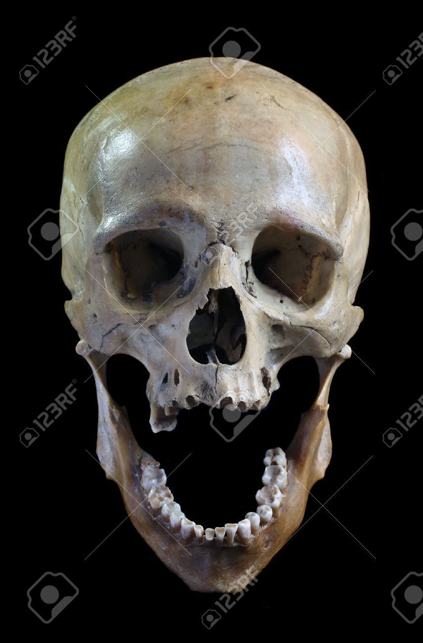 9507390 Skull Of The Person On A Black Background Stock Photo Skull