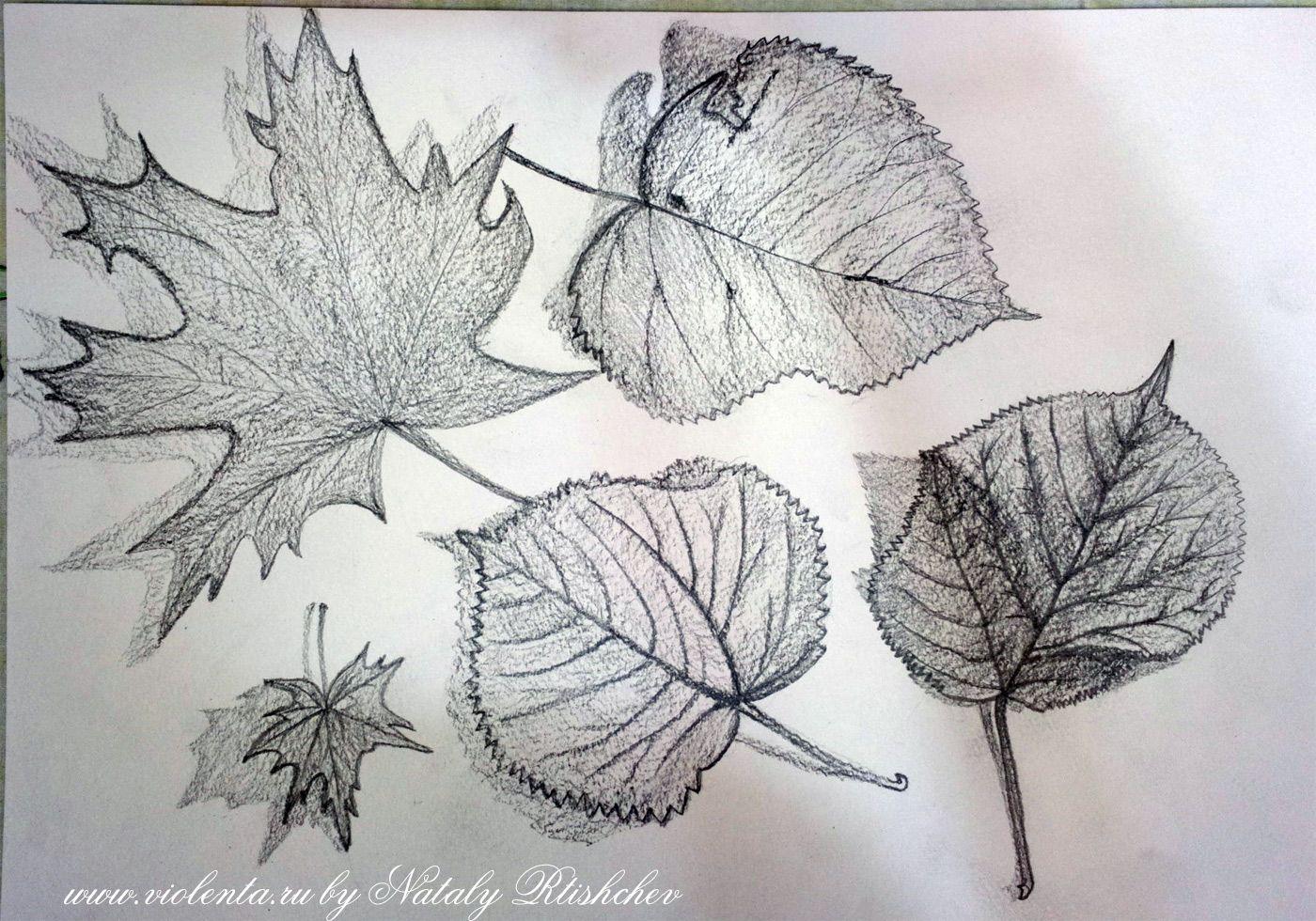 Картинки осенние листья нарисованные карандашом