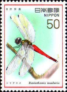 Dragonfly (Boninthemis insularis)