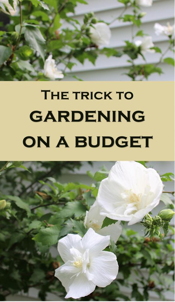 Growing a Garden on a Budget - Save Money
