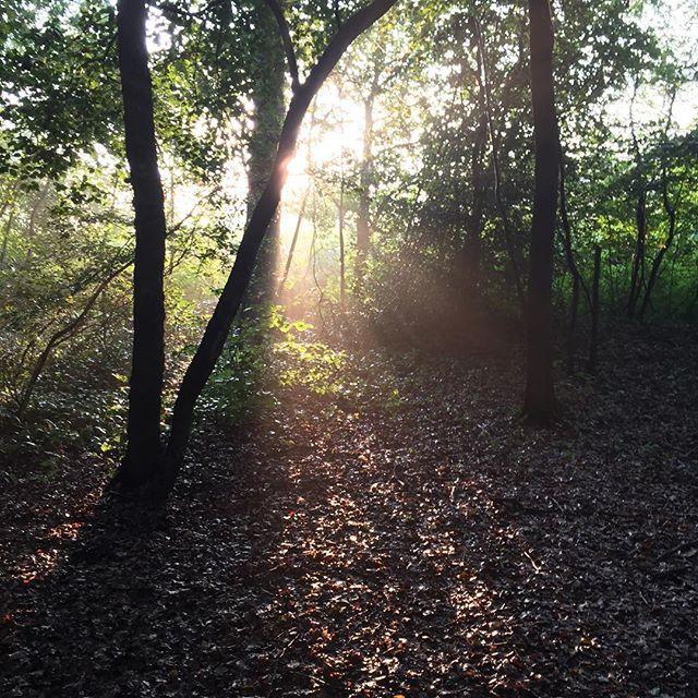 Sonne im Wald bei der Hunderunde.  #Wald #sonne #spaziergang #bielefeld