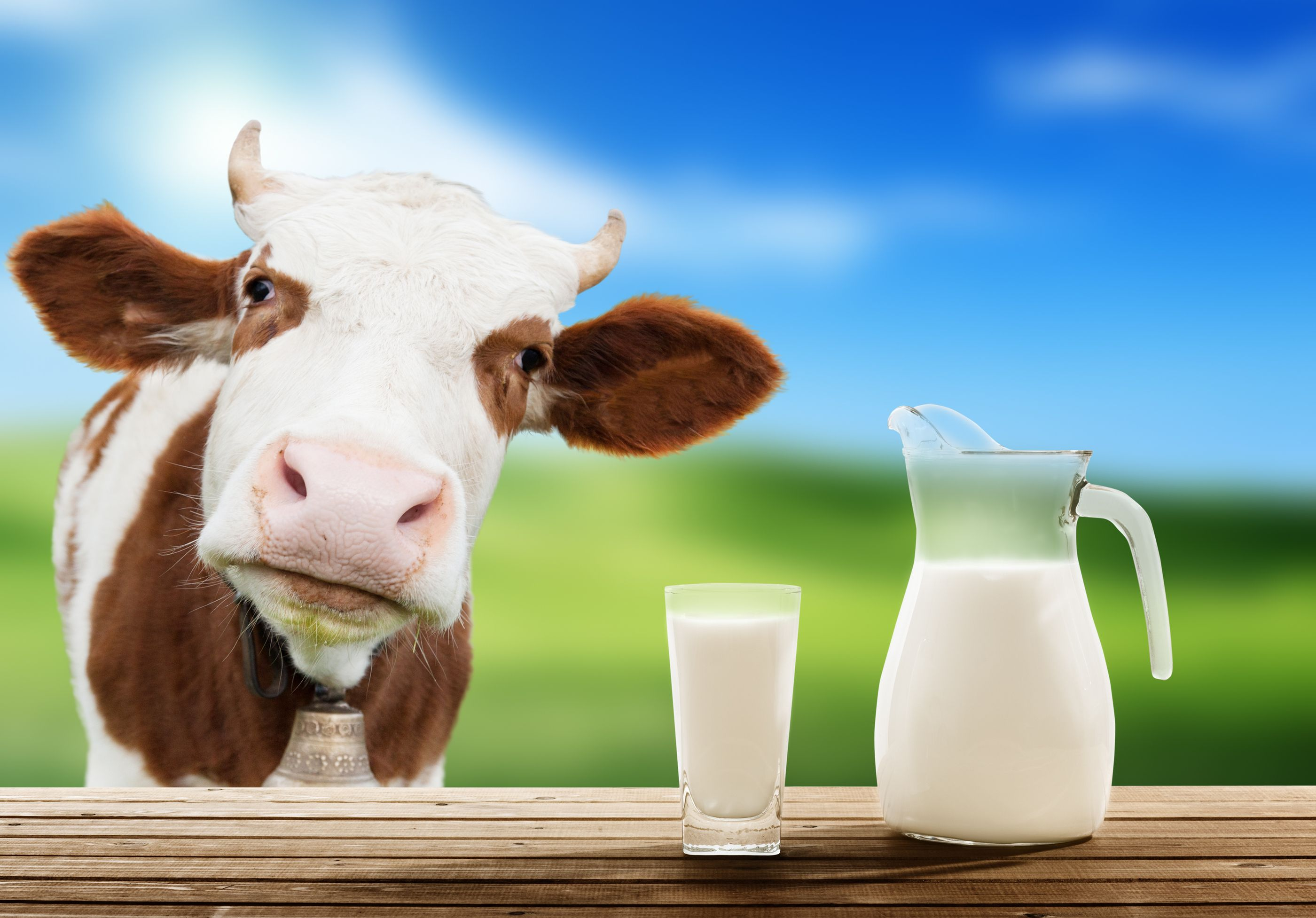 5 Diseases Related to Cow's Milk | Cow's Milk | Cow's milk diseases | Raw  milk, Milk cow, Cow's milk