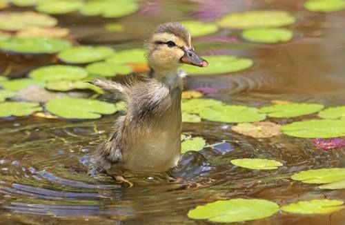 McMurray Hatchery: 2nd place winner of the 2013 Summer Photo Contest - Congratulations!!