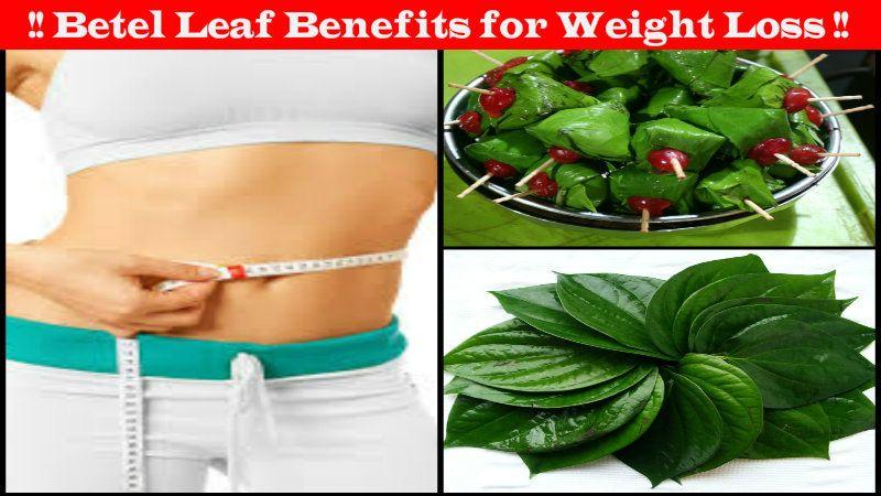 patanjali yogpeeth medicine for weight loss