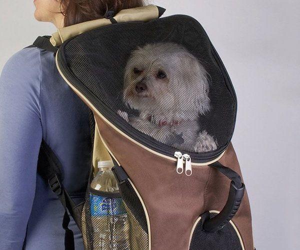Best 25 Puppy Carrier Ideas On Pinterest Dog Carrier Pet Carriers And Cat Carrier