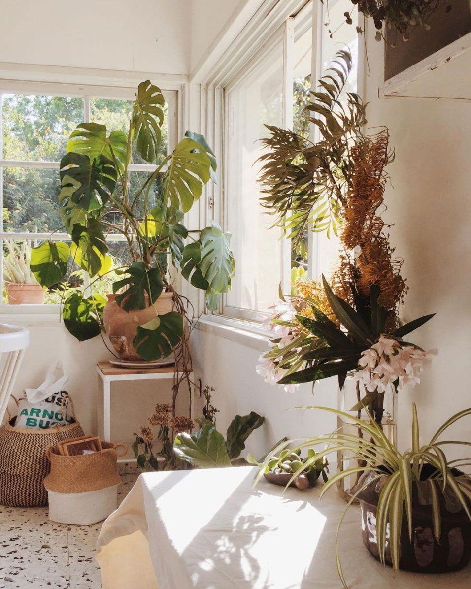 Instagram worthy eloeil plants gardens for Mobilia instagram