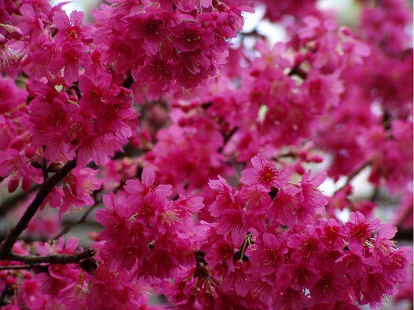 Chestnuthilltreefarm Flowering Trees Flowers Photography Tree