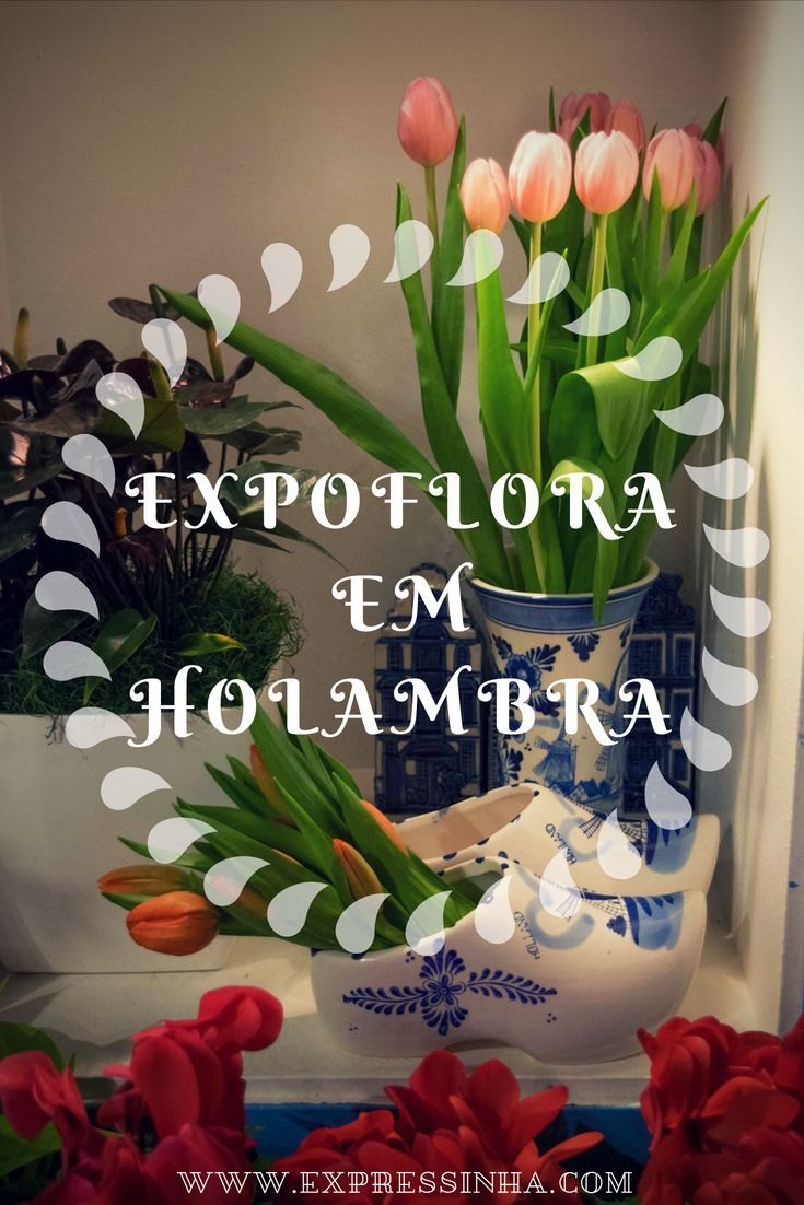 Visite A Expoflora Em Holambra Cidade Das Flores Viagens