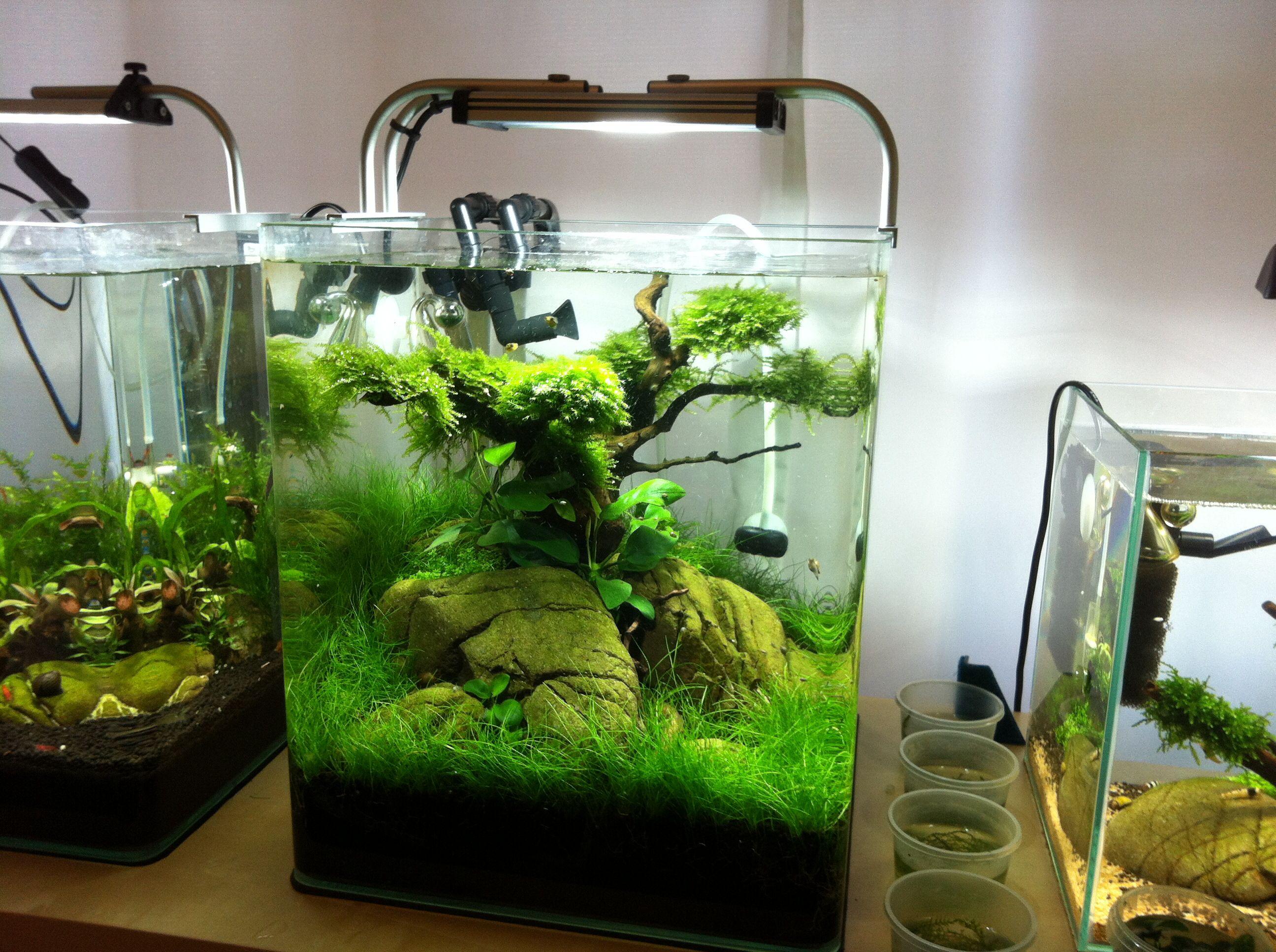 Aquarium nano fish tank - Aquarium