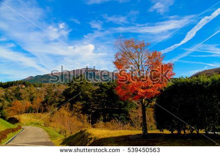 beautiful tree with the mountain and blue sky on background,JAPAN