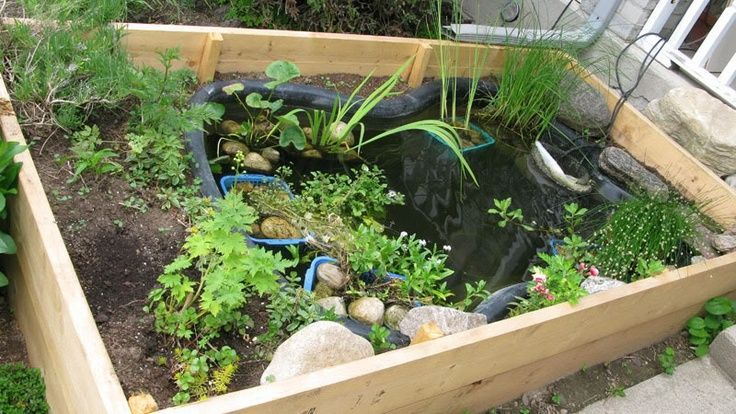 Space was limited, so I built my pond in a raised bed by ...