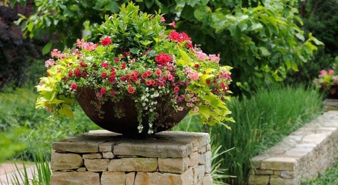17 best images about beautiful container gardens on pinterest gardens container gardening and planters