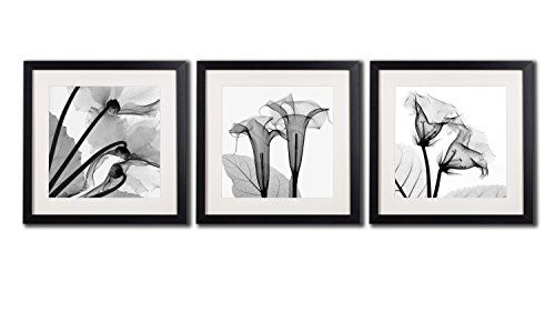 409c5733fdb Framed Poppy Wall Art Decor Transparent Flowers Canvas Print Artworks For  Home Decorations A Set Of Black And White Blossom Printed Posters Painting  ...