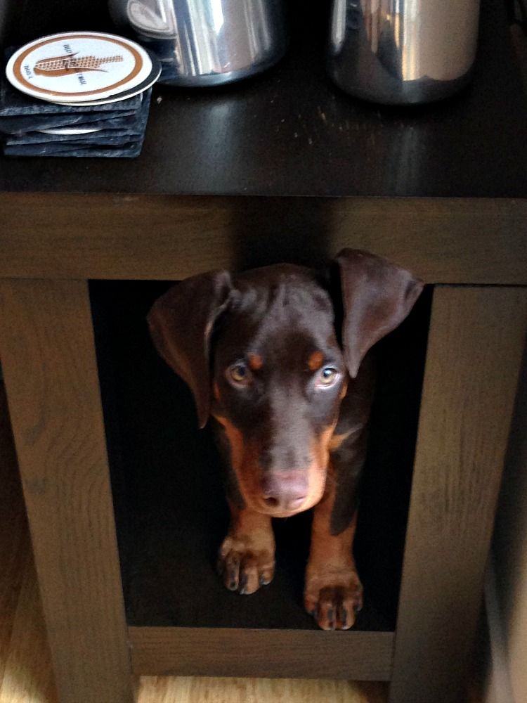 The Top Ten Things To Do to Prepare for a New Puppy New