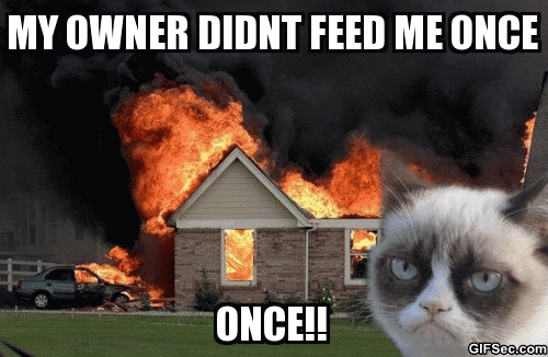 Pin on Grumpy cat!☆
