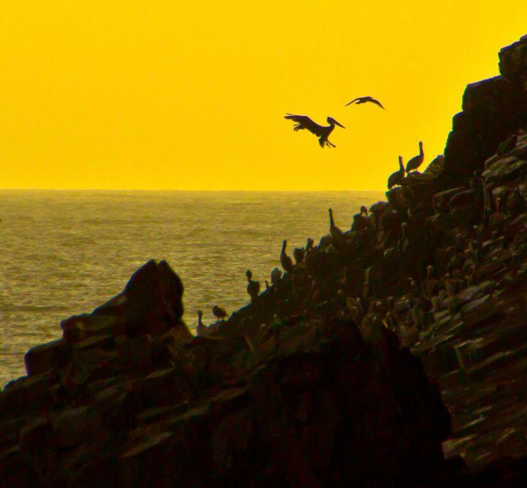 Pelican Roost - Ecola