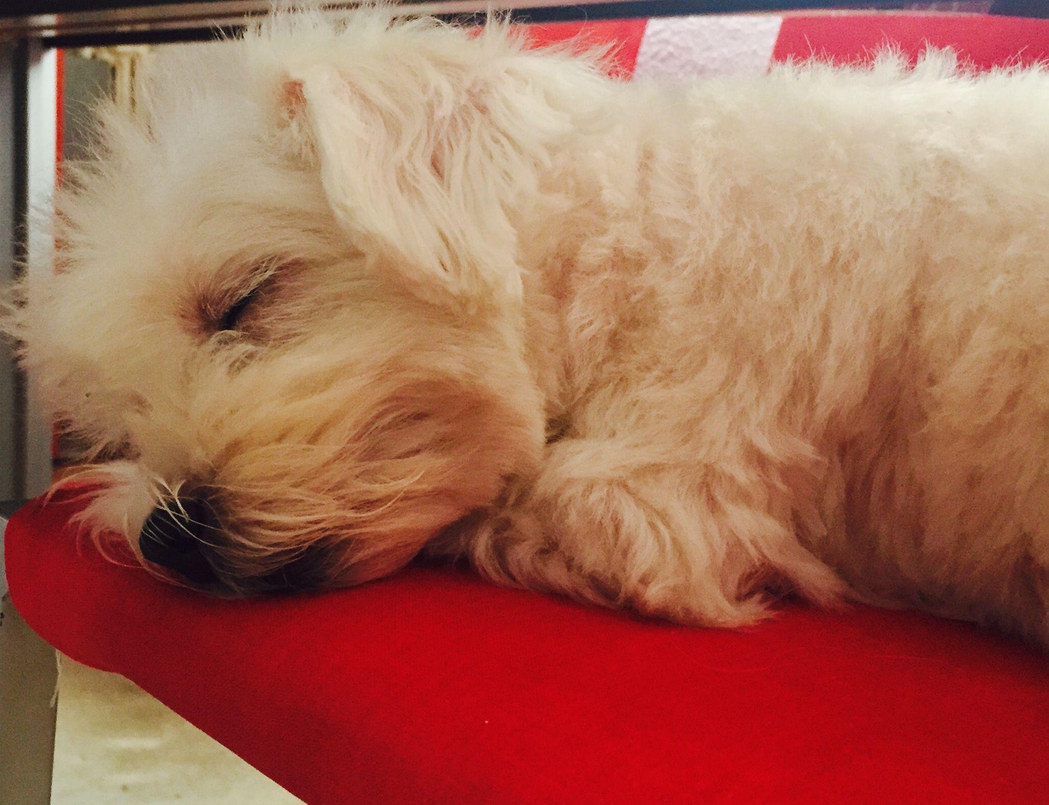 Durmiendo plácidamente!!!!
