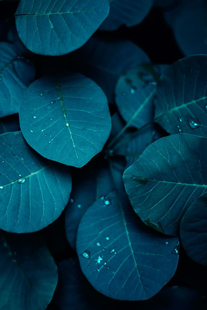 Pin By Clement Puertolas On Chronos Plant Wallpaper Nature Photography Plant Photography
