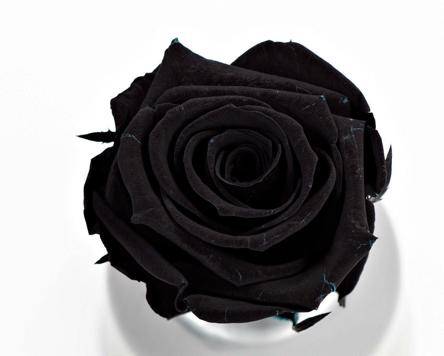 Black Ecuadorian roses now sale,six long lasting roses in