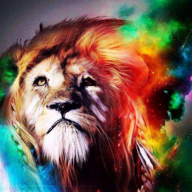 Lion Wallpaper, Lion Hd