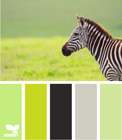 zebra hues - replace grey with white! I like the idea of black/white with various bright/subdued green accents
