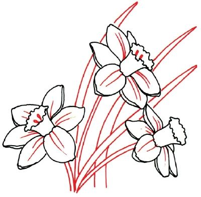 How To Draw A Daffodil In 5 Steps Flower Drawing Roses Drawing Flower Doodles