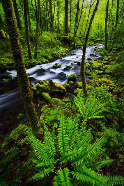 Inside Forest Stunning Pics 10 Columbia River Gorge Oregon