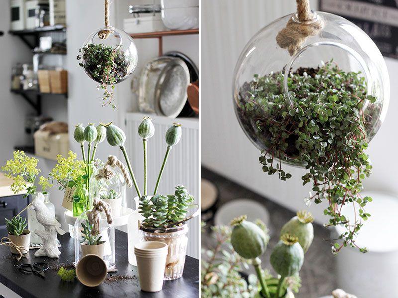 Urban Jungle In Der Kuche Schon Bei Dir By Depot Glaskugel Wohnzimmer Pflanzen Hangepflanzen