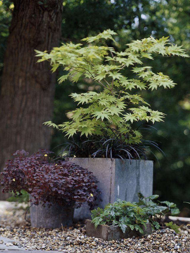 18 Japanese Maple Trees You Should Definitely Plant in Your Yard #japanesemaple