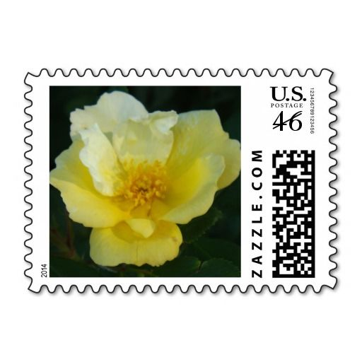 Sunny knockout rose postage stamps
