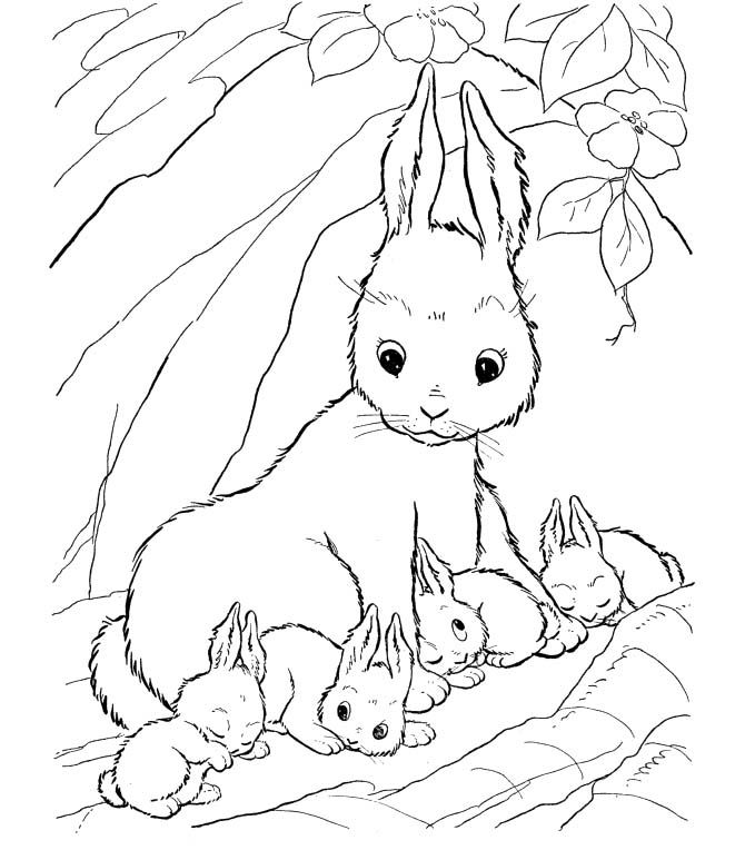 A Rabbit Who Was Protecting His Son Coloring Pages Bunny Coloring Pages Cartoon Coloring Pages Fox Coloring Page