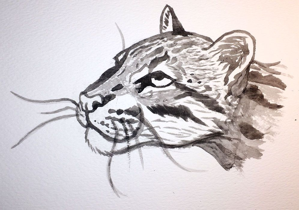 Just a little ocelot study to test out the ink stone kit I got from Daiso. It works surprisingly well for how cheap it was! I don't have much practice with inking with a brush, but with how small a...