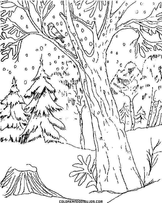 Dibujos Para Colorear De Animales Del Bosque  AZ Dibujos para