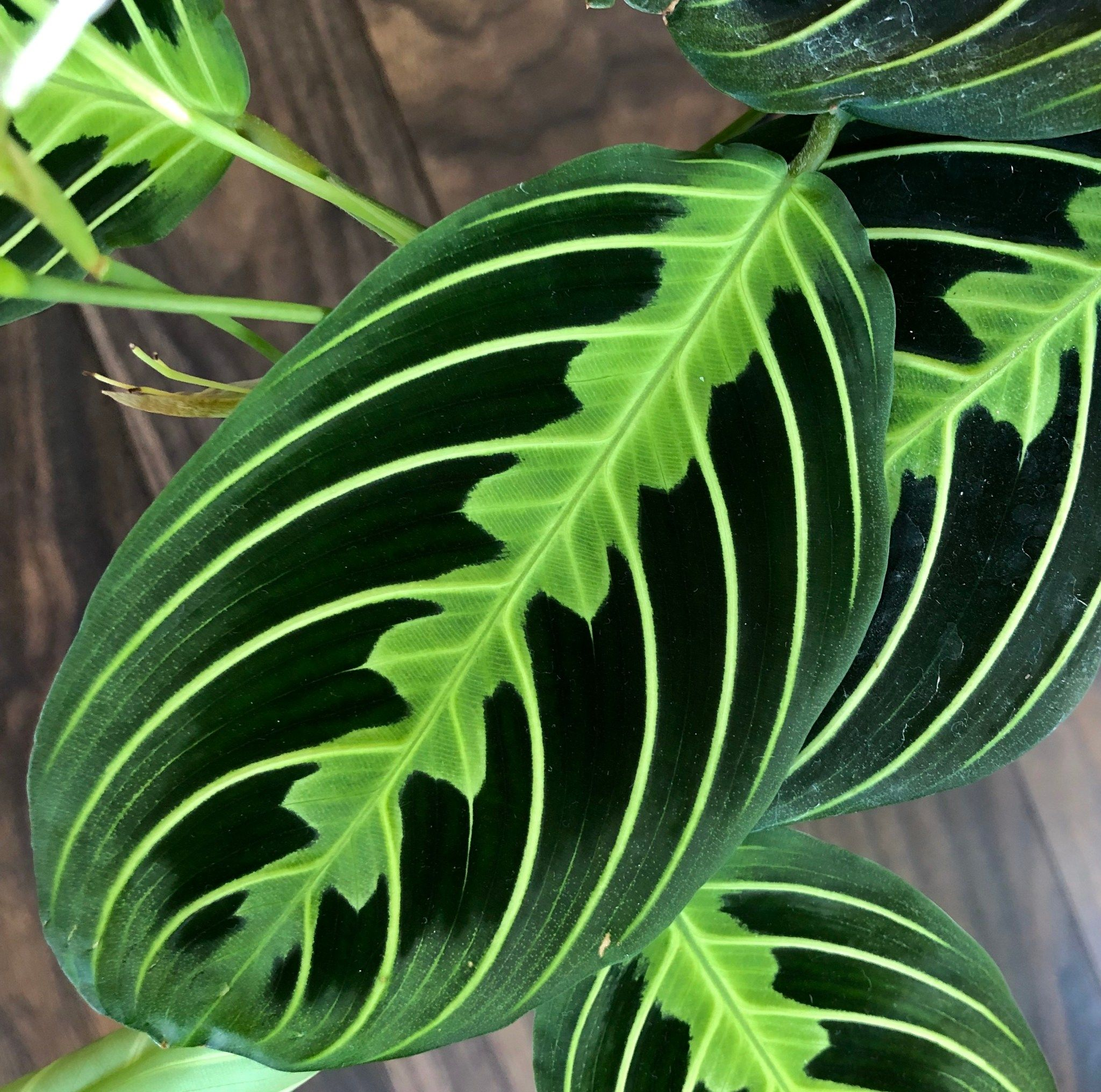 10 Best NonToxic Houseplants That are Safe For Children
