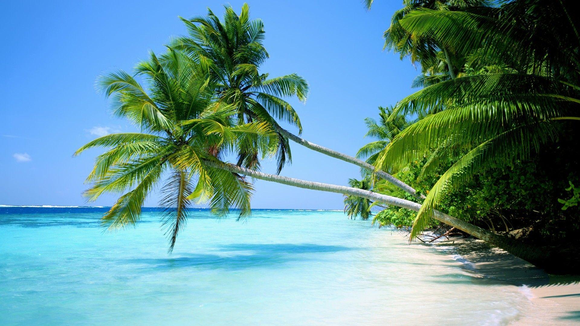 Océano paisajes playa árboles tropicales islas de palma