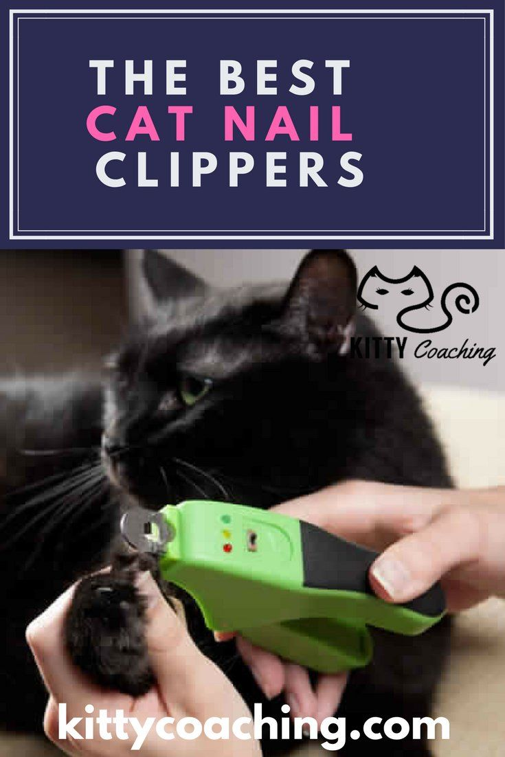 The Best Nail Clippers for Cats