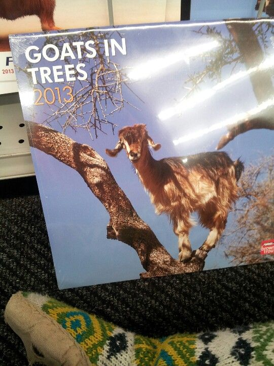 Everyone embrace the fact that this is areal calendar I saw at Staples today.
