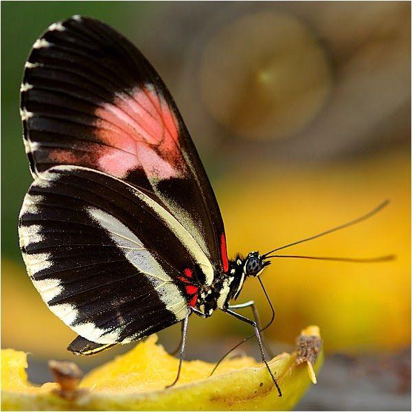 صور أجمل الفراشات الملونة مداد الجليد Beautiful Butterflies Butterfly Mother Nature