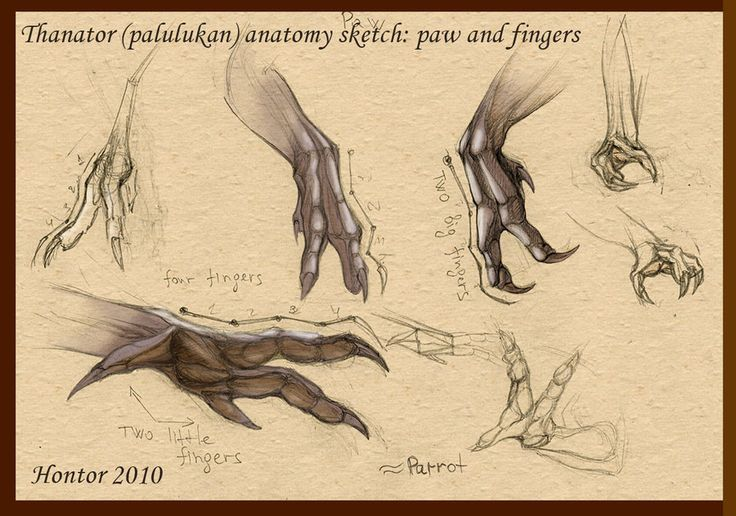thanator concept art | Anatomy sketches, Alien concept art ...