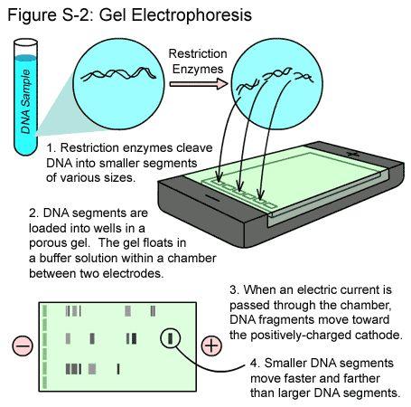 Pin By Shay Fojtik Radke On Microbiology Biology Labs Teaching