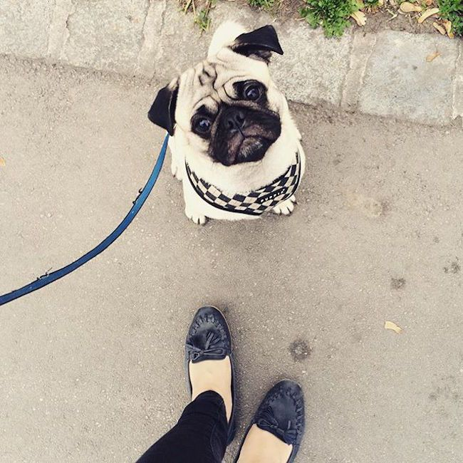 8 Essential Actions You Must Take If You Find A Lost Dog Animals Losing A Dog Dogs Pugs