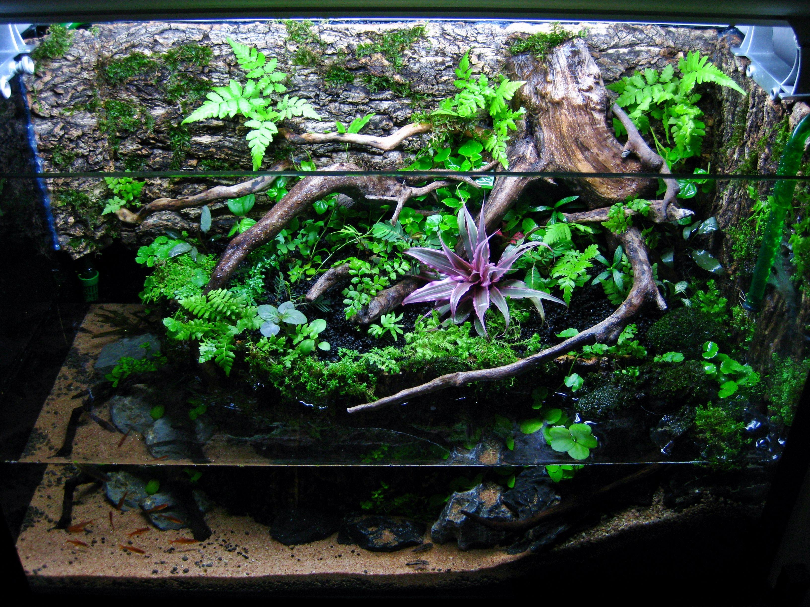 15g paludarium aquaterrarium paludarium pinterest - Begonia argentata ...