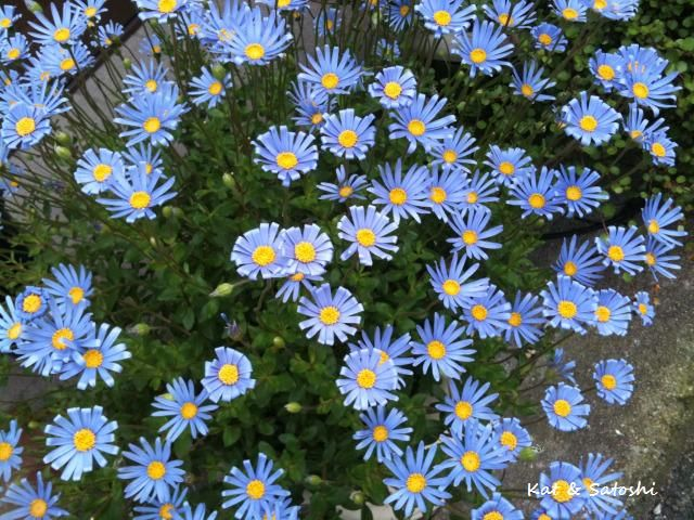 Name All Types Flowers Diffe Of And Their Names The