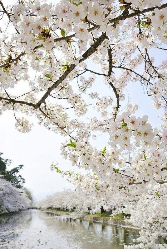 Blossom View Beautiful Flowers Flowering Trees Flowers